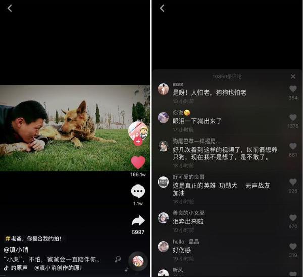 云南消防总队抖音记录汶川英雄犬,百万网友点赞落泪
