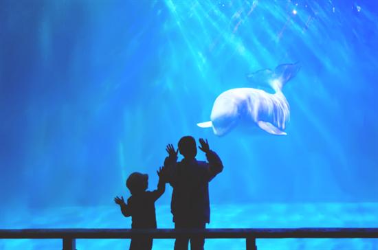 趣游大连圣亚海洋世界,童心畅玩海洋!