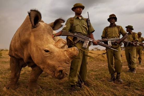 卫星直播再开启 侣行夫妇寻找世上最后的北方白犀牛