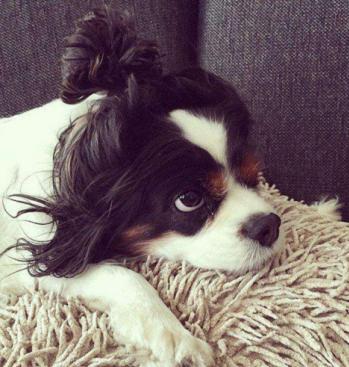 狗狗毛发干燥怎么办,狗狗美毛膏提醒需做到四个细节