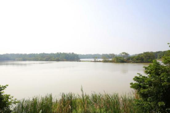 """湿地美景生态赋能 哈啰出行""""蔚蓝保卫战"""" 第二站走进广州南沙湿地"""