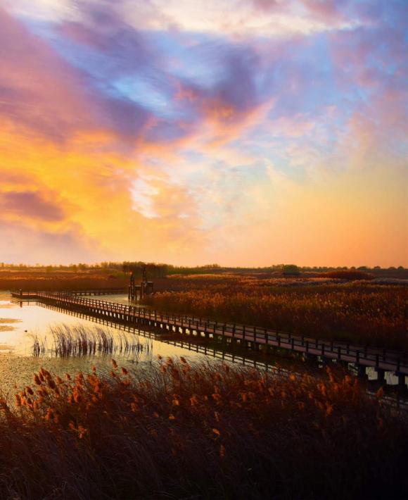 宁波杭州湾国家湿地公园,邂逅芦花好时节