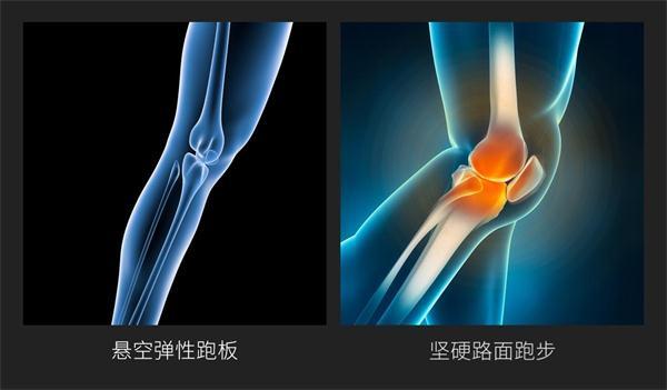 膝盖组成结构图