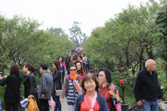 """假期未到人潮先到 太湖龙之梦乐园五一前喜迎上海""""万人团"""""""