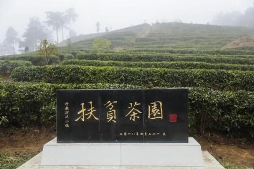 """母亲节送礼新方式 贵州丹寨茶园让""""一人一亩茶园""""心愿达成"""