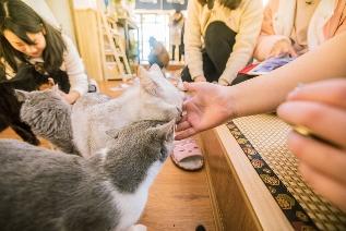 宠物行业飞速发展 纽顿猫粮新品紧追潮流