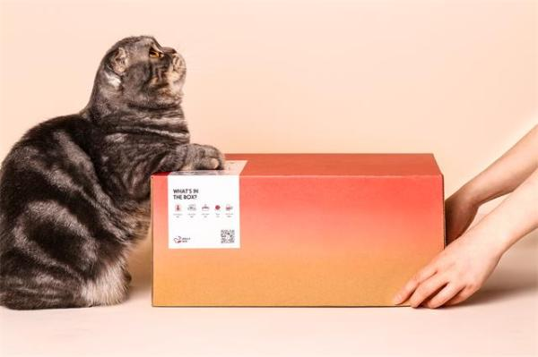 魔力猫盒幼儿园正式开课,科学养宠已成主流