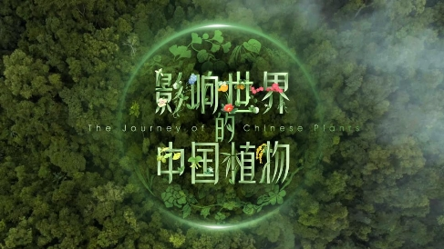 �燮嫠��⑷��W��播首部植物�4K�o�片《影�世界的中��植物》