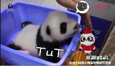 成都熊猫基地携手中国移动咪咕打造全球首次5G+4K+VR大熊猫直播,献礼祖国70华诞