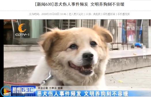 """拒绝""""任性""""遛狗,纽顿呼吁社会公众文明养犬"""