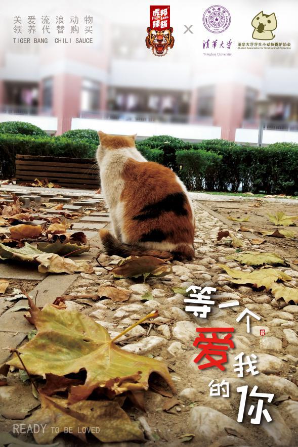 商品代运营合同:虎邦辣酱&清华大学小学生动物保护协会:关爱流浪动物