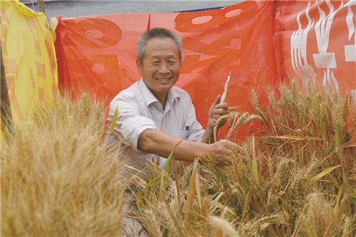 """小麦界的袁隆平?聊聊耿爱民和他的神奇""""蓝麦""""!"""
