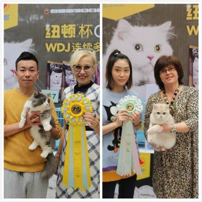 纽顿杯GCCFA第四届国际名猫展圆满收官