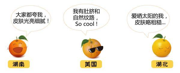 不懂如何置办年货橙?一份来自天使之橙的选橙宝典
