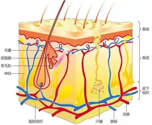 植物医生:从肌肤特质,研发适合东方人的护肤品