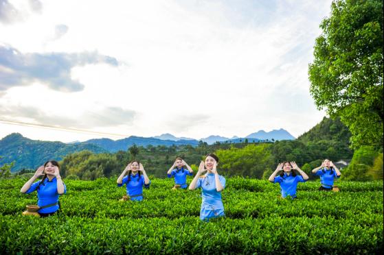铁观音开茶节 龙头茶企八马茶业,助力茶区复工复产