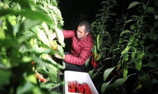 老板电器公益直播助力寿光蔬菜销售,彰显民族品牌的责任担当