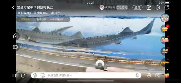 春暖湖北 虎牙全程直播中华鲟回归长江