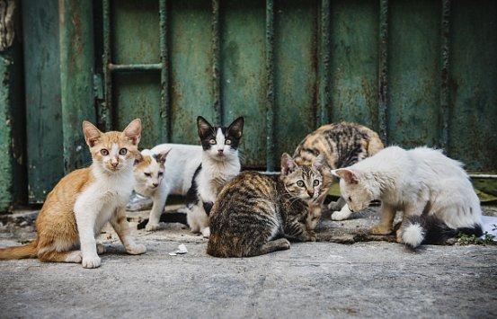 助力宠物公益,MollyBox魔力猫盒一直在路上