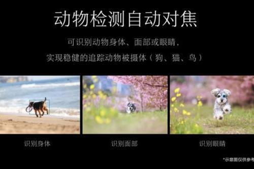 『专业微单相机』专业微单相机推荐:视频拍摄功能亮眼 佳能EOS R5引人瞩目