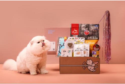 用尽心思给猫主子爱的供养,魔力猫盒献上超值搭配!