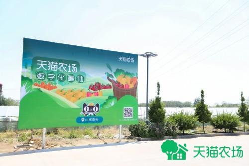蔬菜种植走科技路线,天猫农场携手寿光蔬菜打造数字化基地