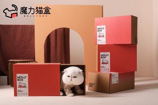 一站式轻松订购的魔力猫盒,把爱与关怀传递给猫主子