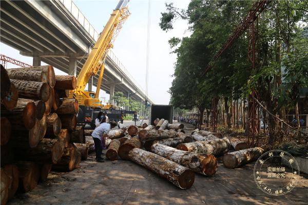 豪利集团董事长杜延金:为原木赋予文化,让原木为文化传承