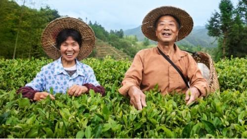 """小罐茶脱贫攻坚收官之年再发力 """"振兴中国好茶公益助农行动""""启动"""
