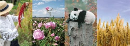 潜心十年,三草两木用自然科学对抗蓝光,彩妆重新定义国妆标准!