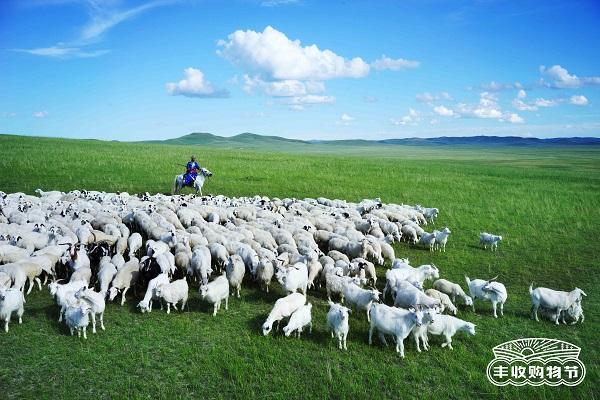 打造呼伦贝尔羊肉节,天猫正宗原产地溯源天然草原羊