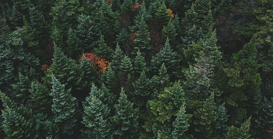 怡和卫浴:掀起全国绿色风暴,换一种方式保护自然