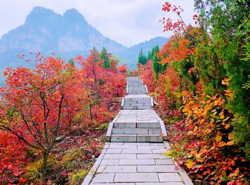 河南新安县荆紫仙山满山红叶,正式进入高峰观赏期,免门票进