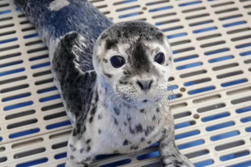 小萌希奥公益再出发:放生小海豹助力海洋生态保护