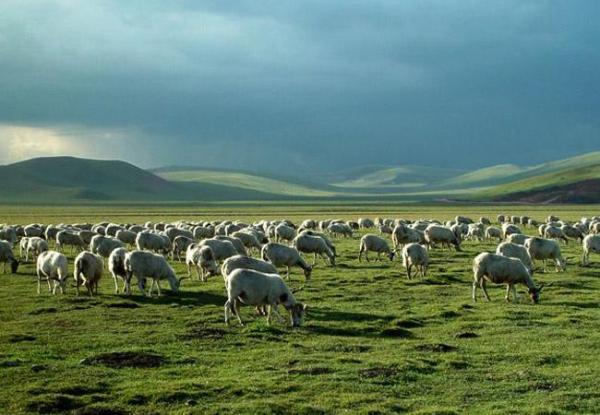 羊奶粉哪款好,澳洲进口的朵拉小羊很不错