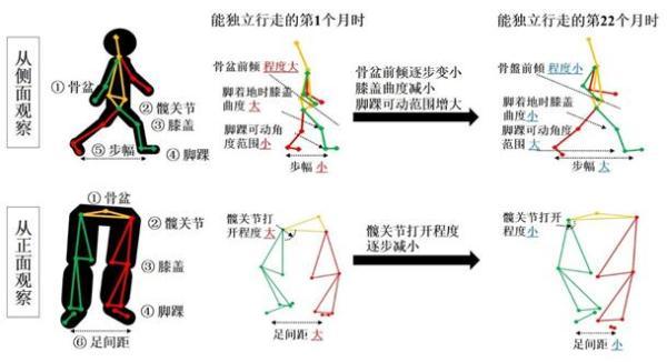 花王运用动作捕捉技术揭示幼儿行走能力发展的内在机制