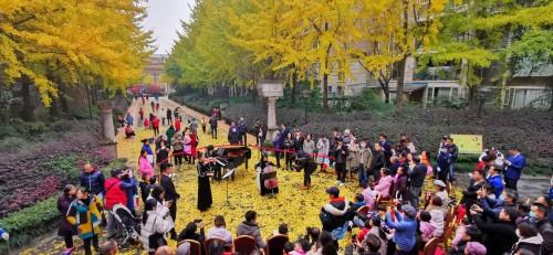 这个小区 将城市音乐厅搬到银杏树下!