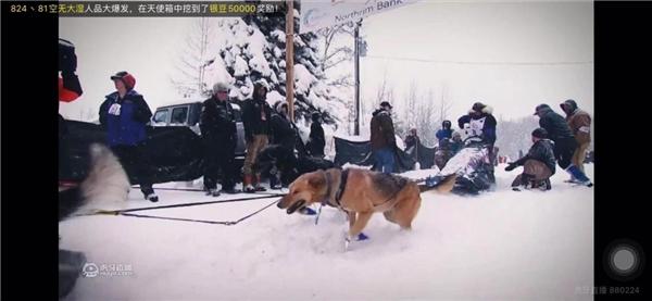 冰雪世界大冒险,《狗拉雪橇北极系列赛》直播首映,实力萌宠上线