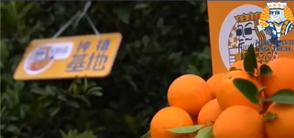 """好橙出赣,K鲜森一路领""""鲜""""!助力赣南脐橙月销200万斤"""