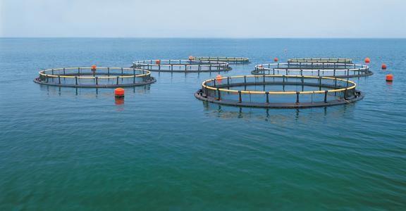 利达华锐,深耕水产养殖饲料,攻克鱼蟹饲料难题