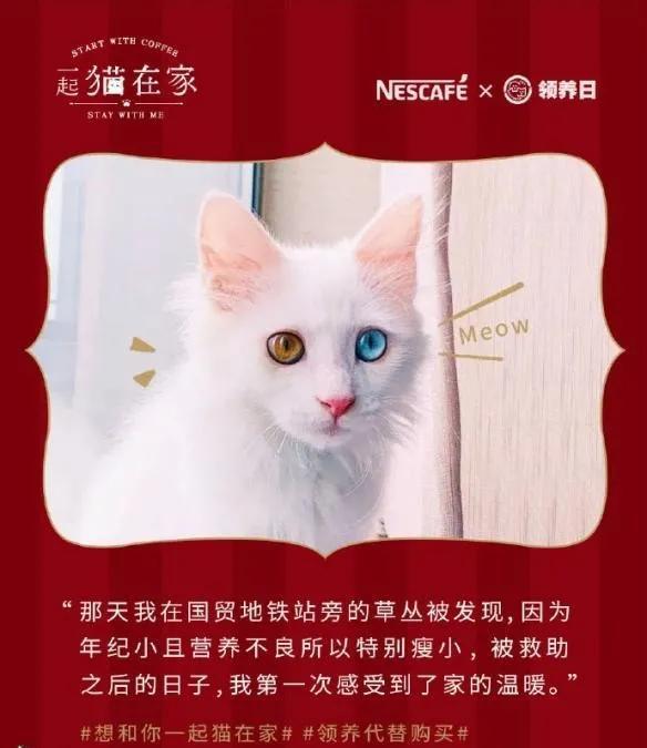 """想和你一起猫在家,雀巢咖啡携手微博""""益""""起温暖冬日的喵星人~"""