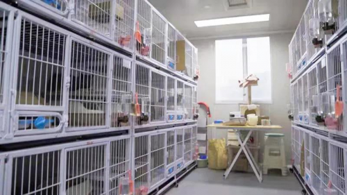 教授团队+两个猫咪营养基地,嘉传猫粮的品牌之路从科研起步