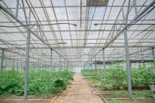 植物学家开拓海外市场 释放高山植物的独特魅力