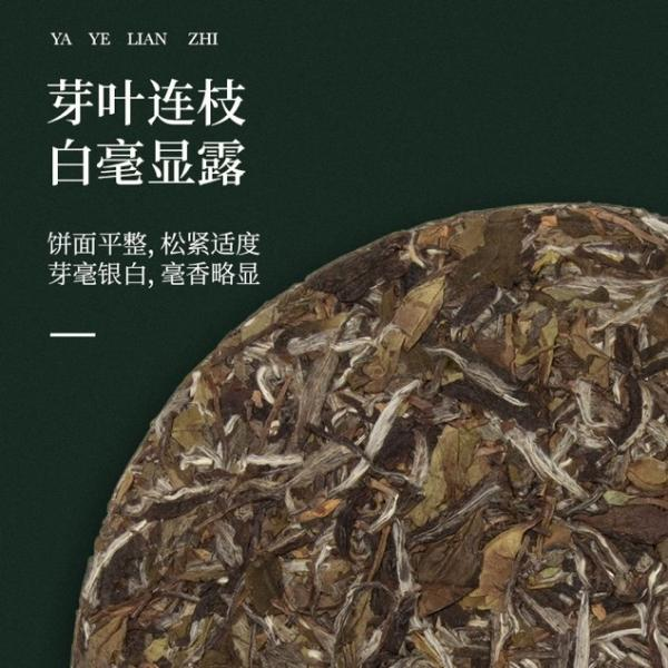 礼赠新春 艺福堂时光系列大师白茶浓情上市