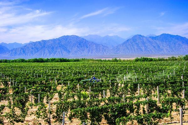 贺兰山东麓的迦南酒厂和第九严酒业研究所推出梦幻马酒
