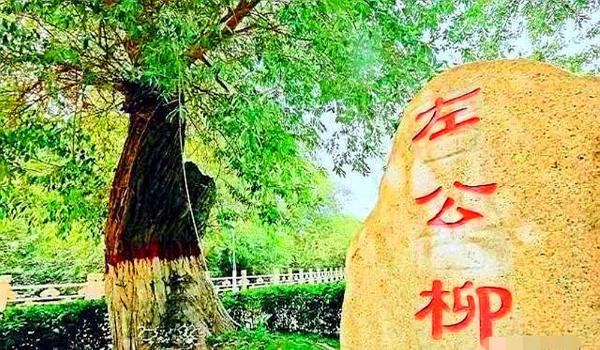 柳荫工程:插柳成荫,利国惠民