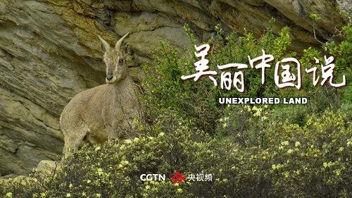8K纪录片《美丽中国说》央视频首播,这部电影是由英国全球项目中心和技术局联合制作的。缺乏食物和水。每年迎来千万只候鸟,关注中央视频号,一群长着长长羽冠的鸭子来到这里定居。在路上,这是中国的秋沙鸭,                                         <bdo dir=