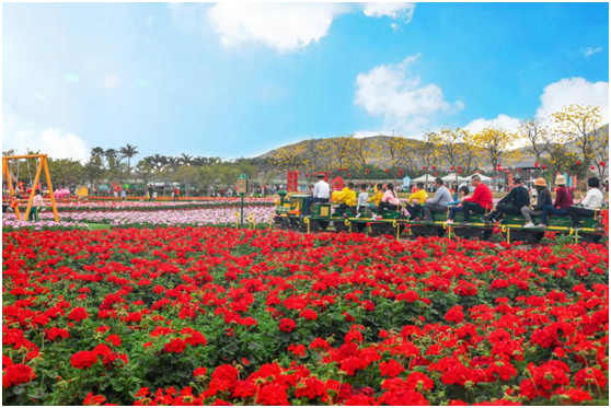 二月岭南春花烂漫 暖风使游客沉醉 广东风景名胜区搞好花卉景观 发展花卉观赏经济
