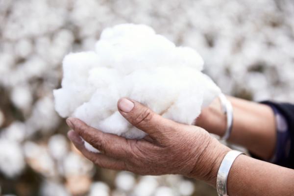 全棉时代溯源新疆棉田,探索棉与自然