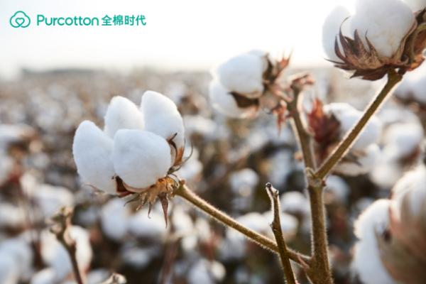 致敬棉花时代棉花保管员溯源之旅背后的故事